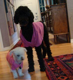 Chloe and lulu